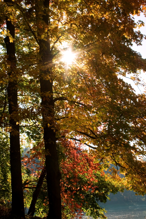 Sun through Autumn Trees